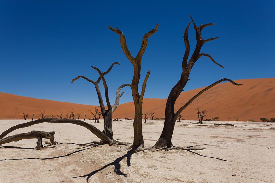 Kalahari Desert Photograph - Dead Vlei by Davide Guidolin