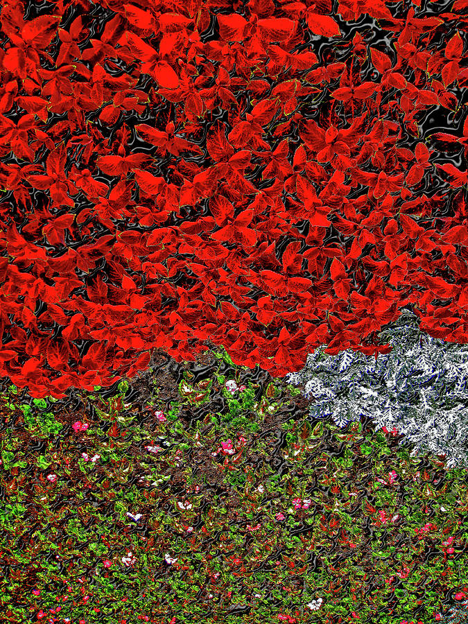 Flower Carpet Photograph - Flower Carpet. by Andy Za