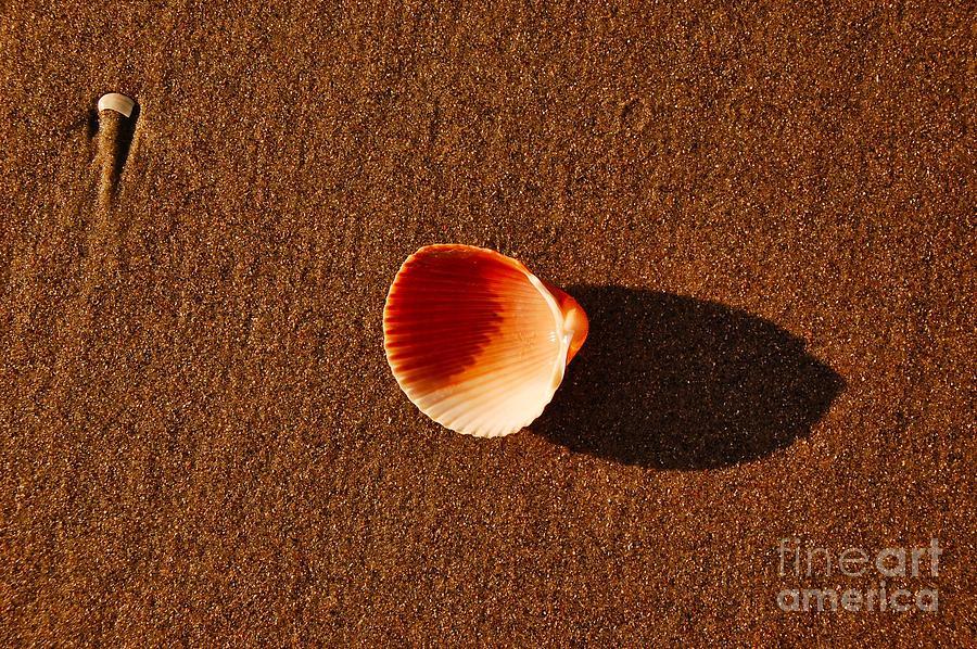 Beach Photograph - Beach Shell by Scott Diffee