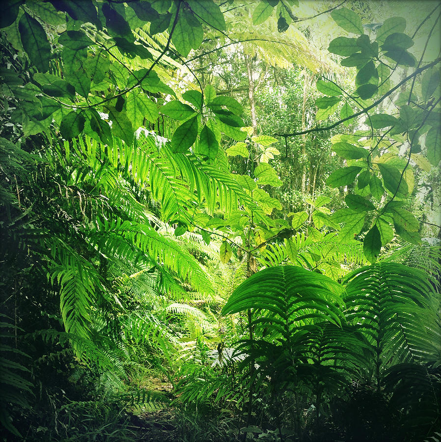 Rain Forest Photograph - Jungle Leaves by Les Cunliffe