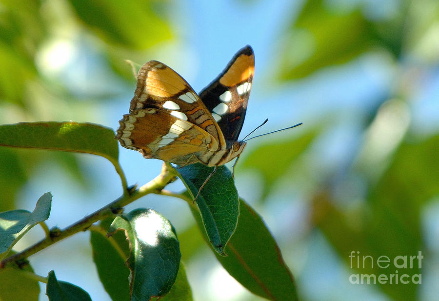 Butterfly Photograph - Butterfly by Marc Bittan