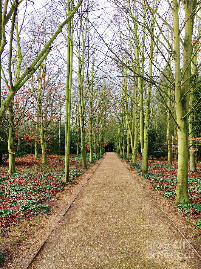 Autumn Photograph - A Woodland Path by Tom Gowanlock