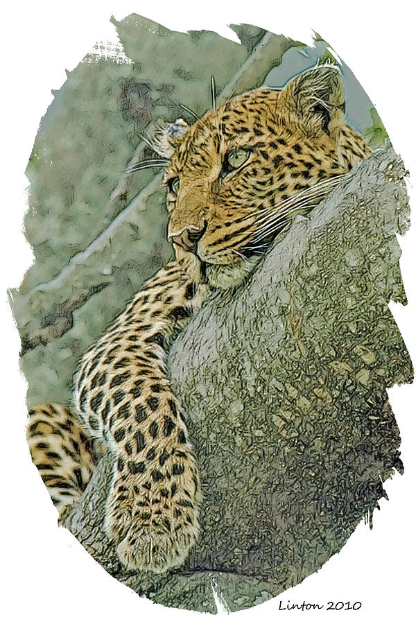 African Leopard Digital Art - African Leopard by Larry Linton