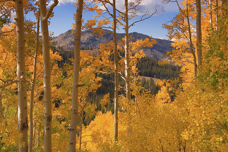 Autumn Colors in the Wasatch Mountains by Douglas Pulsipher