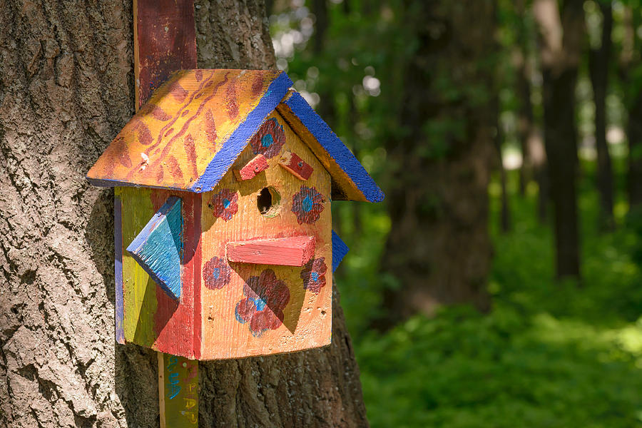 Wood Bird Shelter : Bird shelter in the wood photograph by alain de maximy