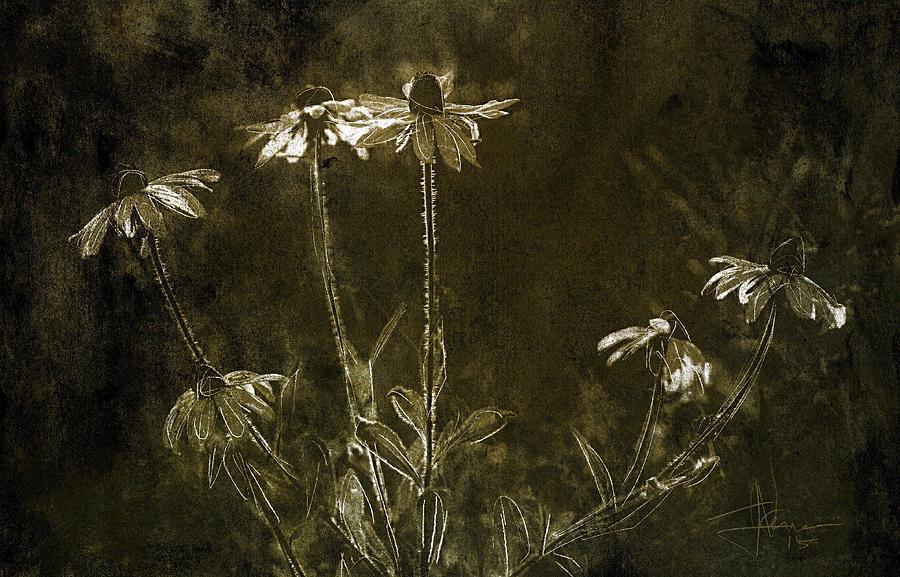 Flowers Photograph - Black Eyed Susans by Jim Vance
