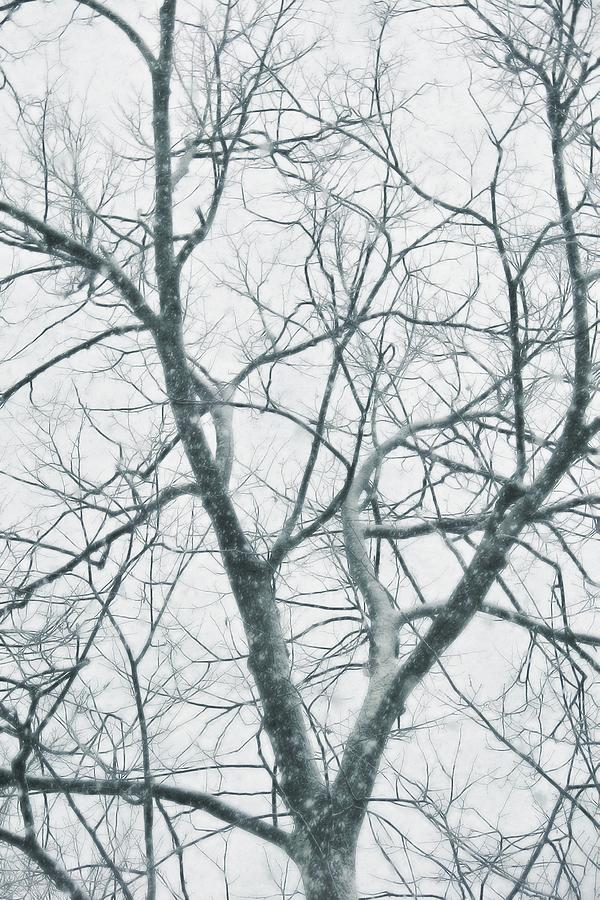 Tree Photograph - Blizzard by JAMART Photography