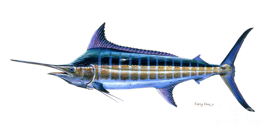 Blue Marlin Painting - Blue Marlin 3 by Carey Chen