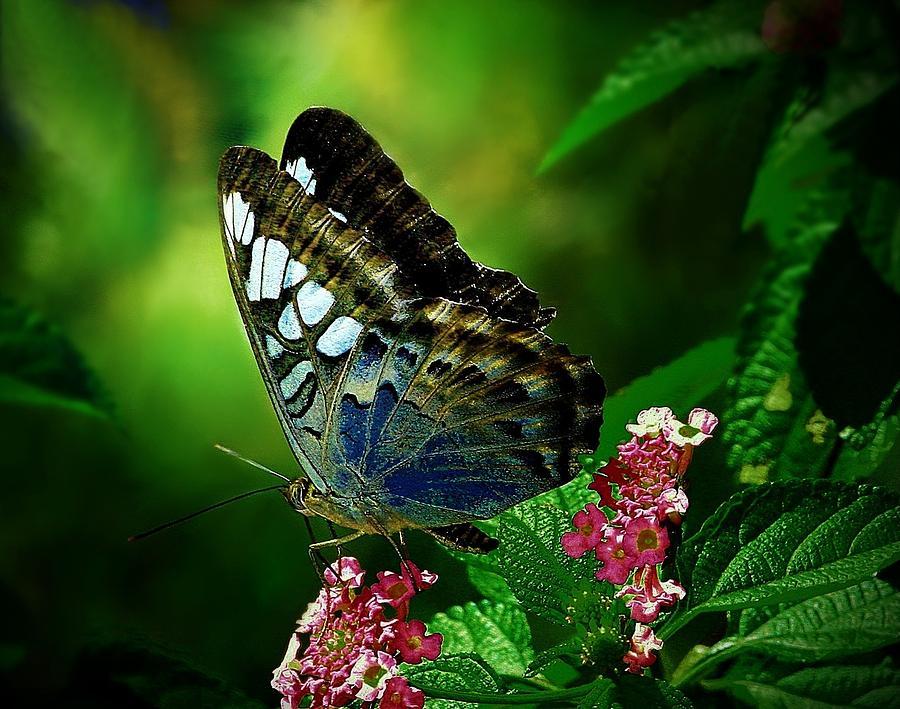 Butterfly Digital Art - Butterfly by Dorothy Binder