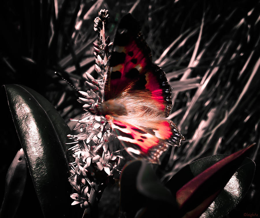 Butterfly Photograph - Butterfly by Leigh Smith