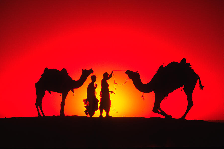 India Photograph - Camels At Sunset by Michele Burgess