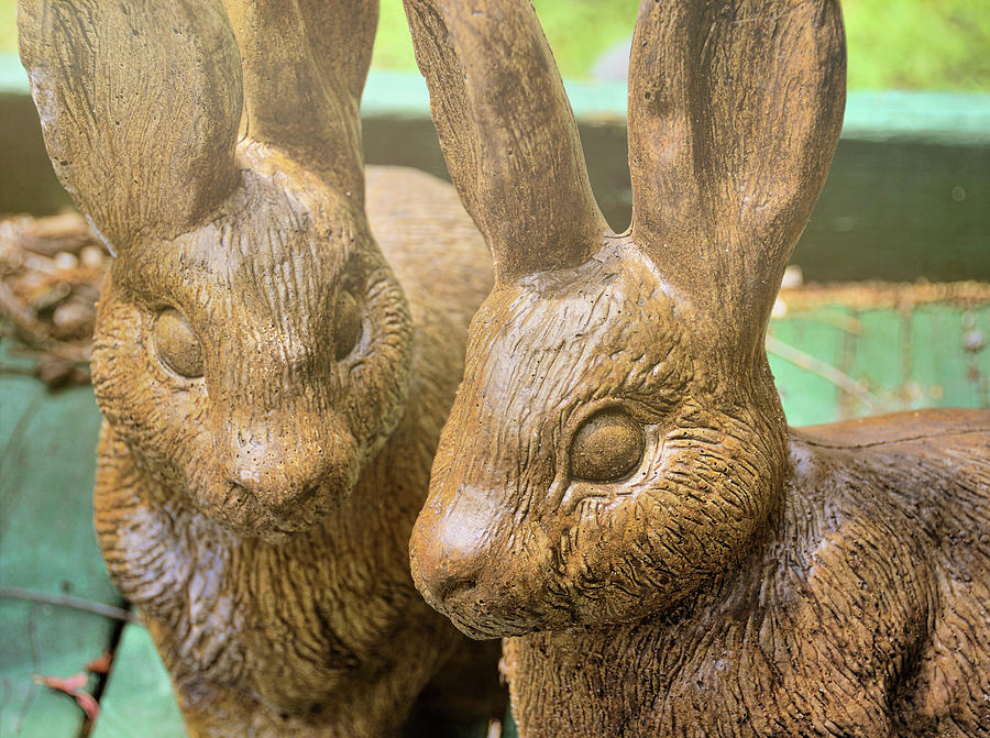 Stone Photograph - Garden Cottontails  by JAMART Photography