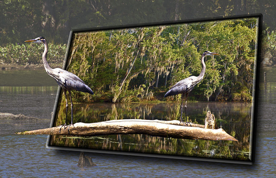 3-d Great Blue Crane Photograph by Michael Whitaker
