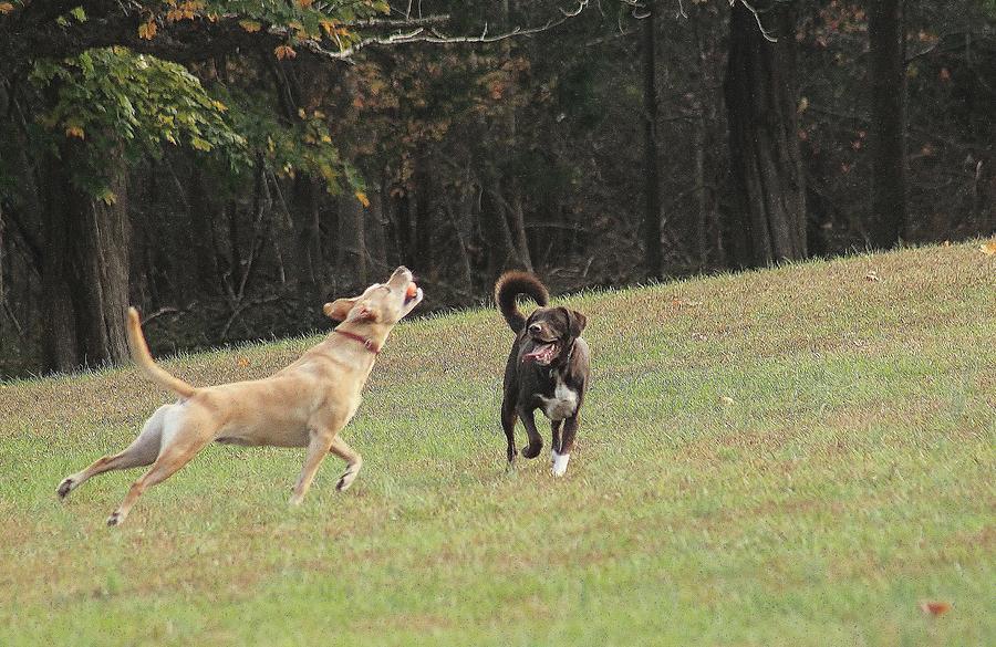Nature Photograph - Dog Playing by Valia Bradshaw
