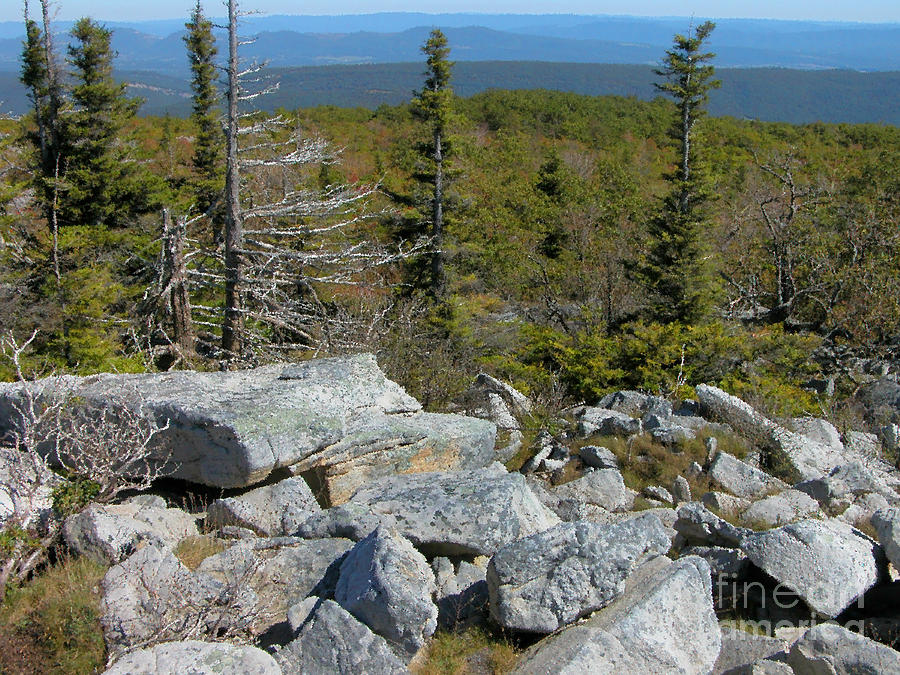 Dolly Sods Photograph - Dolly Sods Wilderness by Thomas R Fletcher