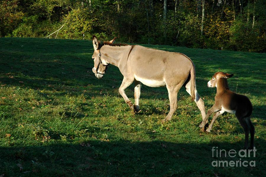 Donkey Photograph - Donkey With Foal by Thomas R Fletcher