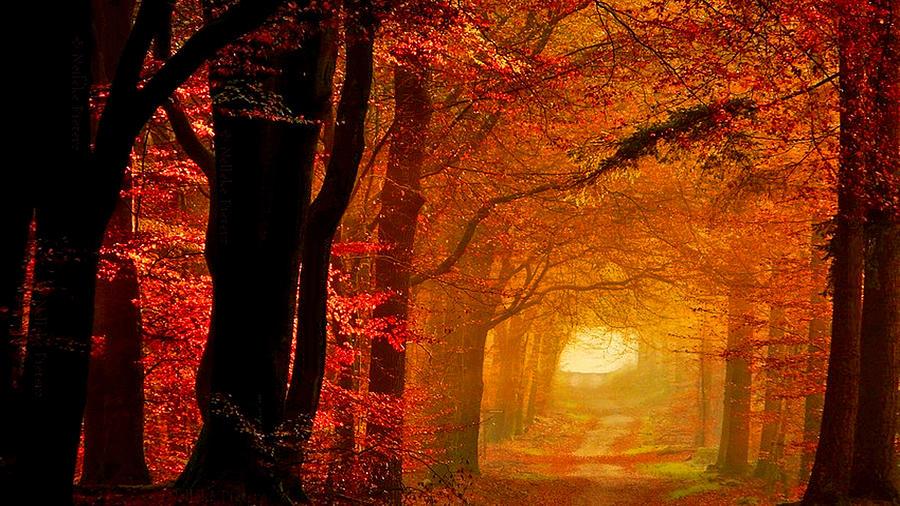 Fall Digital Art - Fall by Dorothy Binder