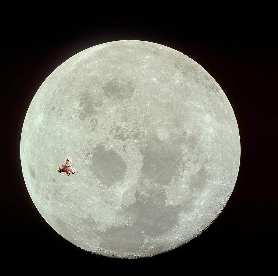 Animal Framed Prints Photograph - Fifi Goes To The Moon by Michael Ledray