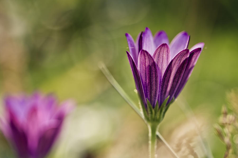 Flower On Summer Meadow Photograph