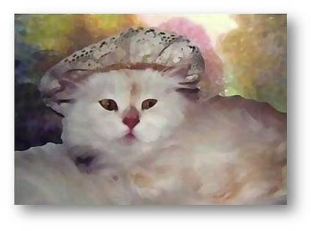 Cats Mixed Media - Frivolous Frills by Brenda garacci
