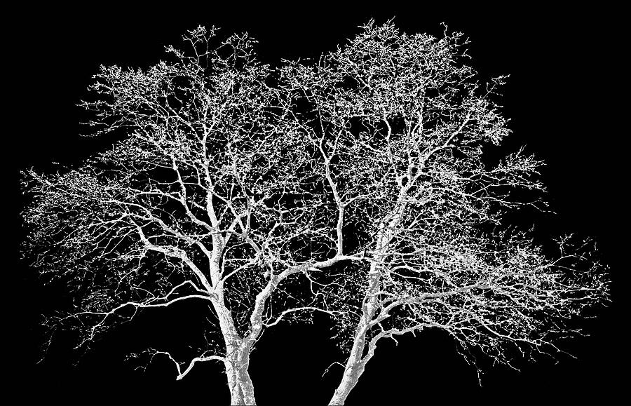 Trees Photograph - Ghost Trees by Jim Smith