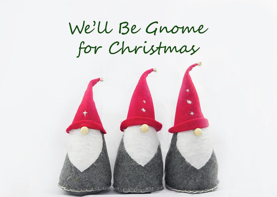 Christmas Gnomes Photograph
