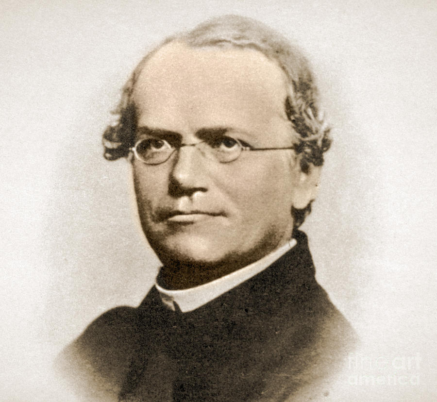 famous biologist gregor mendel This is where gregor mendel, a friar at the augustinian abbey of st thomas,  spent  a professor of biology and chemistry at the university of cincinnati  clermont  some biographers speculate that he was investigating a popular  theory that.