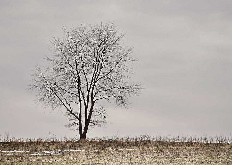 Tree Photograph - February Horizon   by JAMART Photography