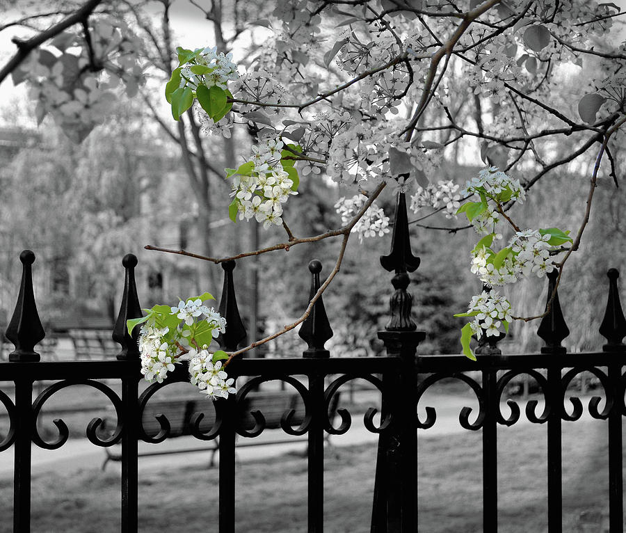 Jersey Photograph - Joyces Spring Time by JAMART Photography