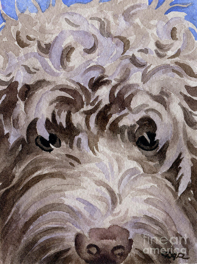 Labradoodle Painting - Labradoodle by David Rogers