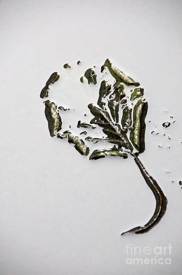 Botanical Photograph - Leaf by Bernard Jaubert