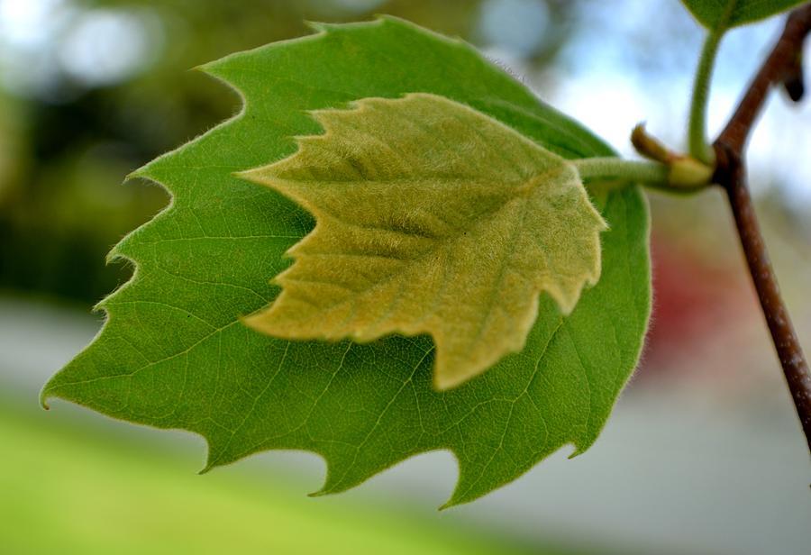 Leaf Photograph - Ive Got Your Back by Ekta Gupta