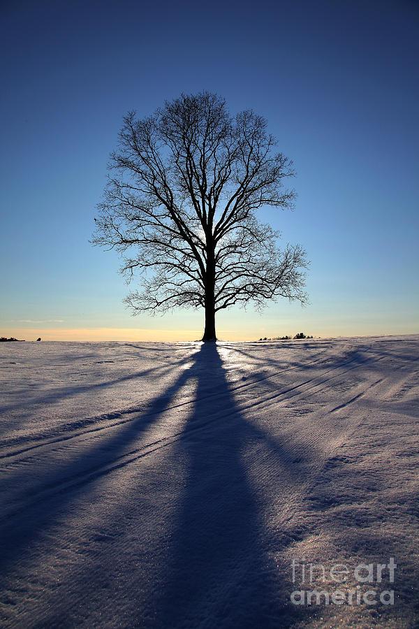 Landscape Photograph - Lone Tree In Snow by Larry Landolfi