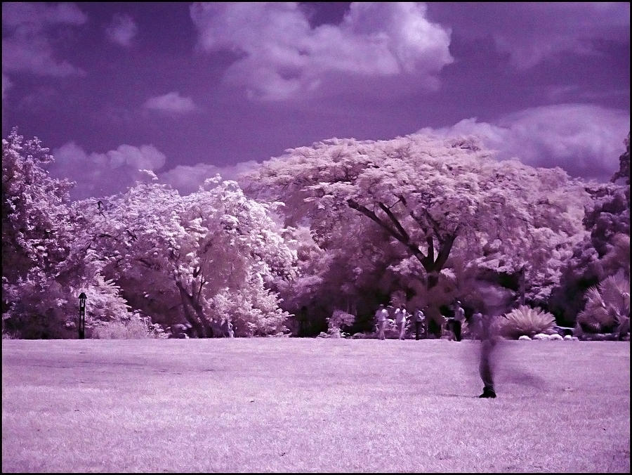 Infrared Photograph - Magic Garden  by Galeria Trompiz