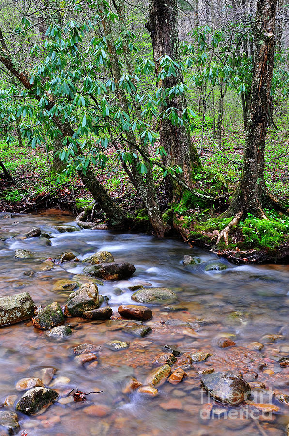 West Virginia Photograph - Middle Fork Of Williams River by Thomas R Fletcher
