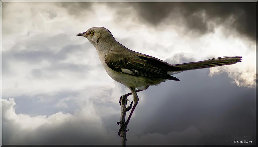 2d Photograph - Mockingbird by Brian Wallace