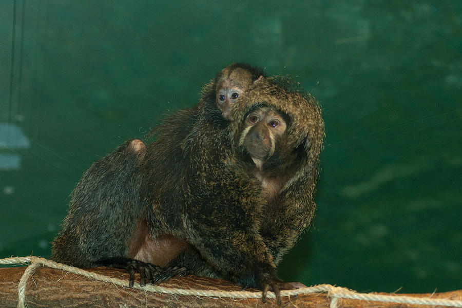 Animal Photograph - Mother And Child by Craig Hosterman