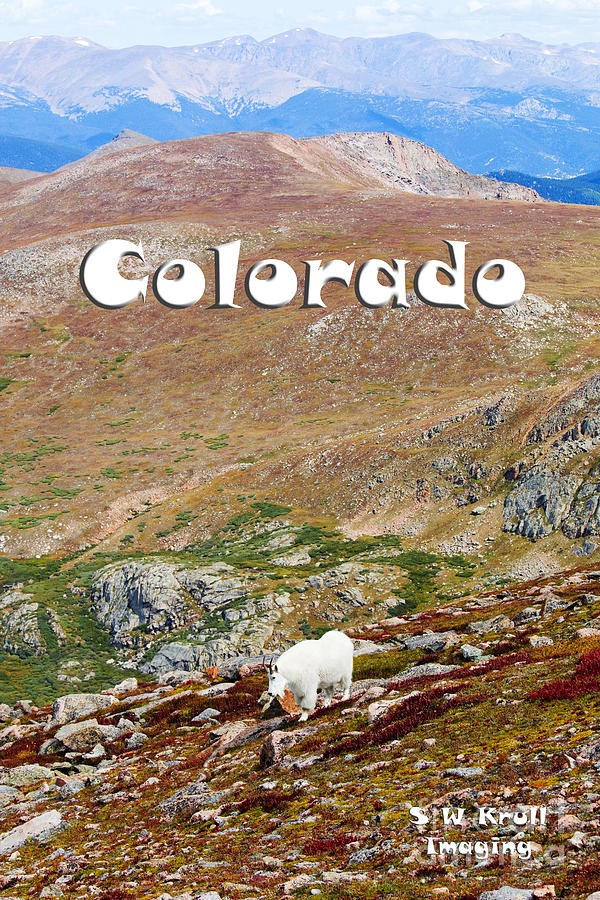 Mountain Goats On Mount Bierstadt In The Arapahoe National Fores Photograph
