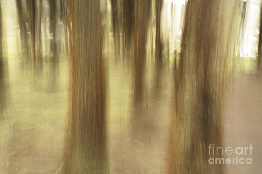 Abstract Photograph - Nature Abstract by Gaspar Avila