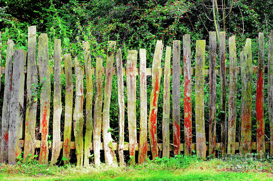 Aged Photograph - Old Fence 3 by Tom Gowanlock