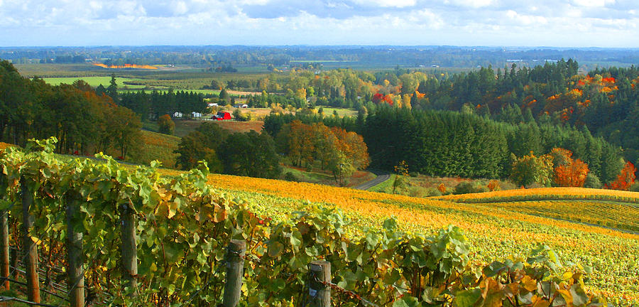 Vineyards Photograph - Oregon Wine Country by Margaret Hood