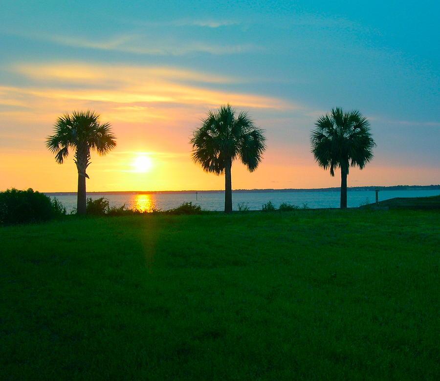 Sunset Photograph - 3 Palms by Gila Rayberg