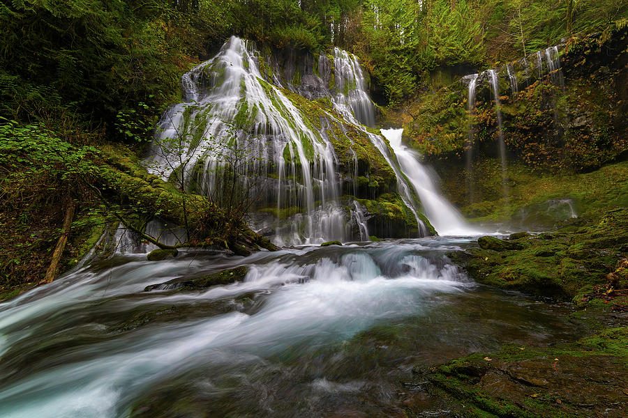 Panther Creek Falls Photograph - Panther Creek Falls by David Gn
