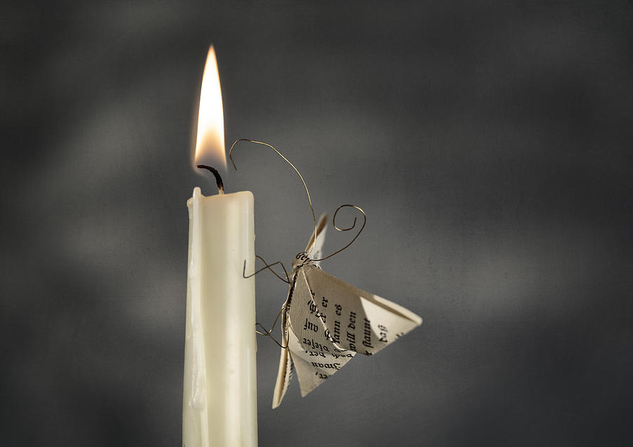 Paper Butterfly Photograph