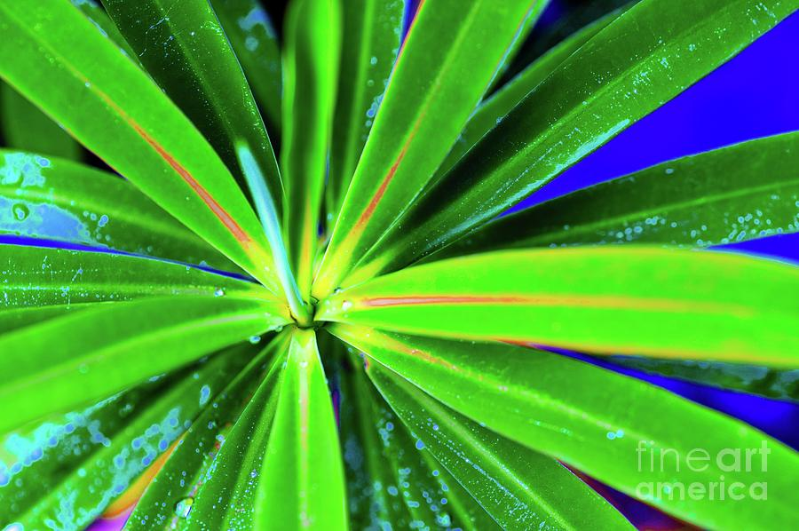 Plants Photograph - Plants And Flowers In Hawaii 547 C by D Davila