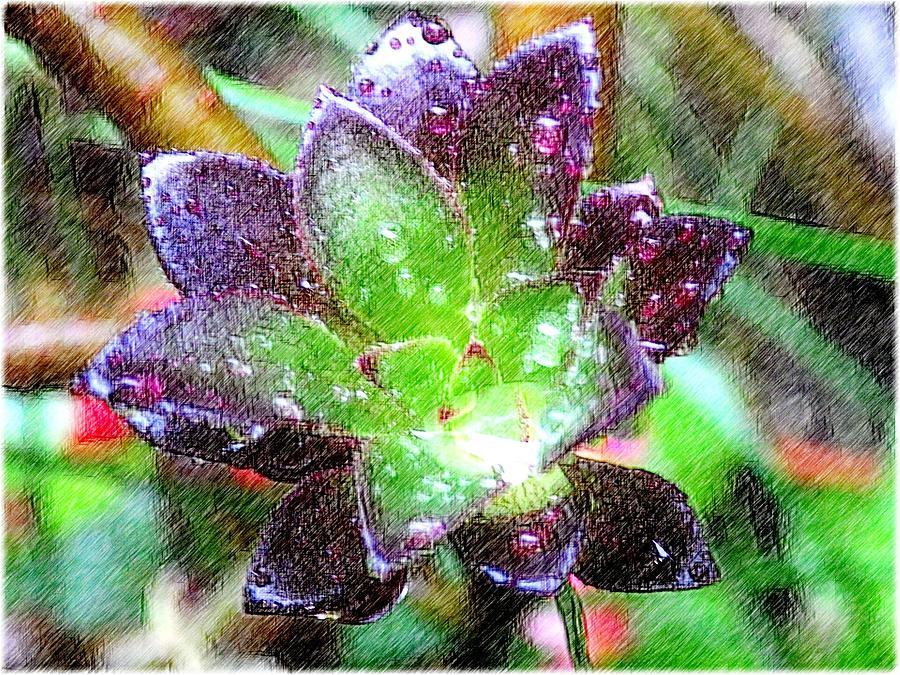 Rain Digital Art - Raindrops by Kumiko Izumi