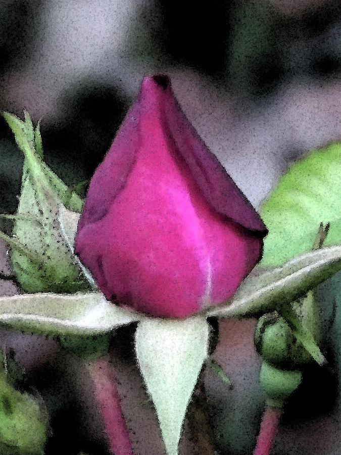 Flowers Digital Art - Rosebud by Michele Caporaso