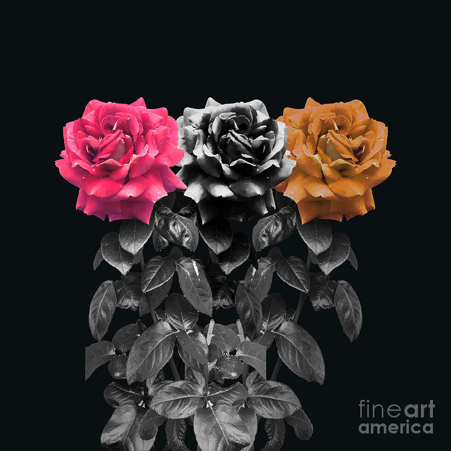 Roses Photograph - 3 Roses by Cesar Padilla