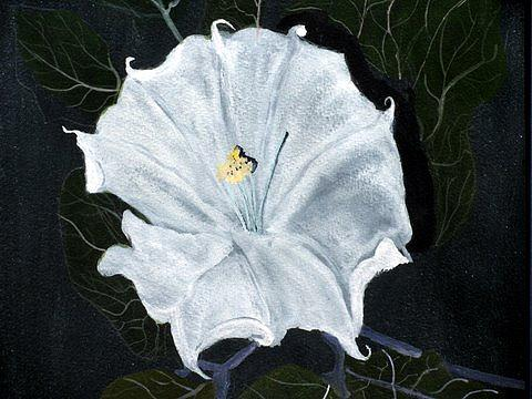 Wildflower Painting - Sacred Datura by Abad Sandoval