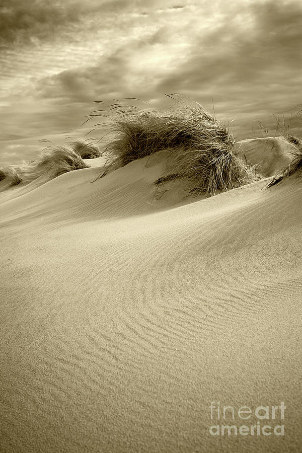 Sand Dunes by Timothy Johnson